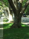 Treerow_2