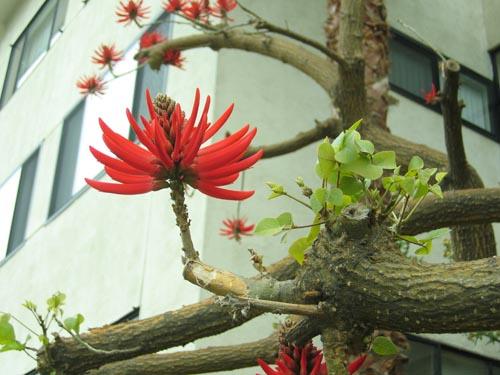 Flowertree